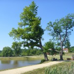 rekonstruovaný zámecký park